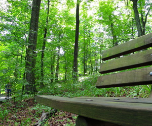 bench, green, and kentucky image