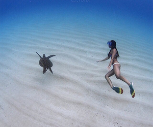 amazing, beach, and diving image