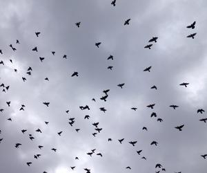 bird, black, and couple image
