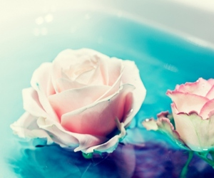 blue, rose, and water image