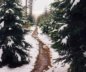 forest, pine trees, and trail image