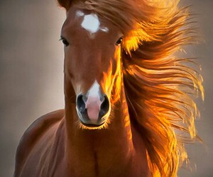animals, horse, and weheartit image