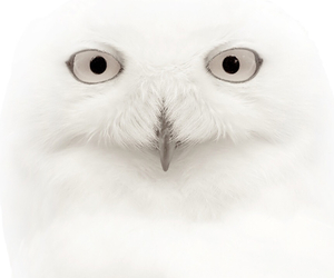 owl, white, and cute image