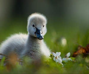 duck, green, and cute image