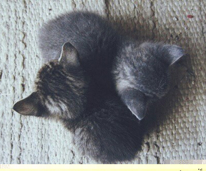 animal, Dream, and cute image