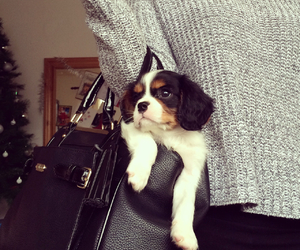 baby, perfection, and puppy image