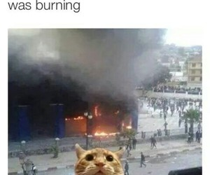 buttercup, district 12, and funny image