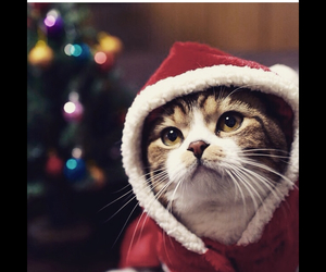 cat, happy new year, and nice image