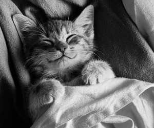 animal, black and white, and cute image
