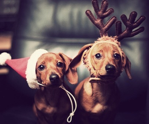 dog, christmas, and cute image