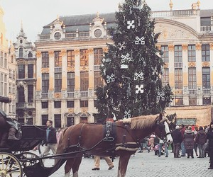 horse, beautiful, and bruxelles image