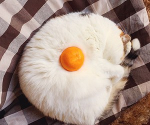 cat, kitty, and egg image