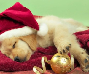 christmas, puppy, and tired image