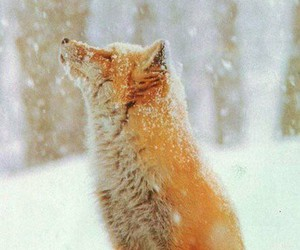 day, forest, and fox image