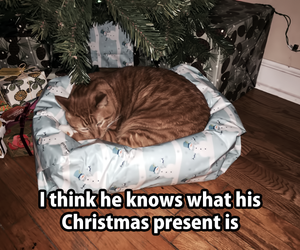 cat, present, and funny image