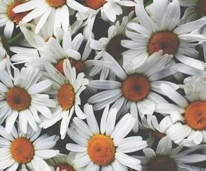 flower and margarita image