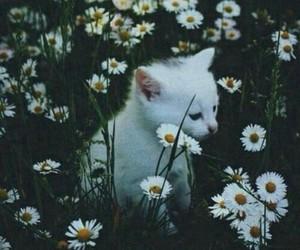 cat, fotografia, and exteriores image