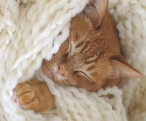 cats, cuddly, and sweet image