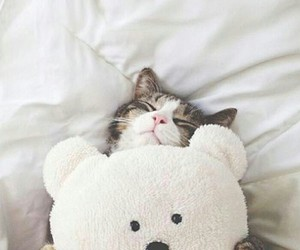 bear, cat, and white image