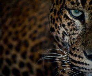 awesome, beautiful, and eyes image