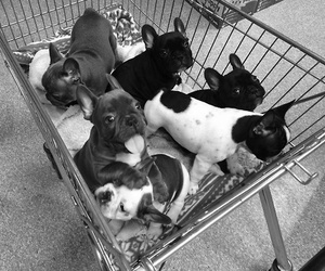 animals, black and white, and puppies image