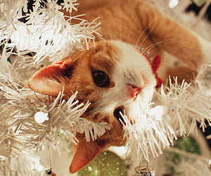 cat, christmas, and xmas image