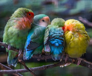 bird, lovebird, and vinatge image