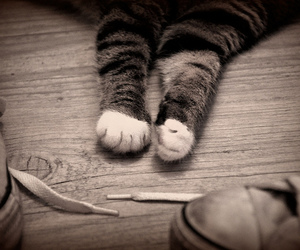 cat, converse, and kitty image