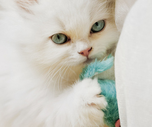 animal, sweet, and cat image