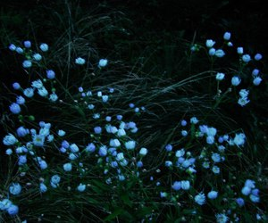 blue, dark, and flowers image