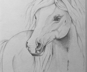cavallo, draw, and drawing image