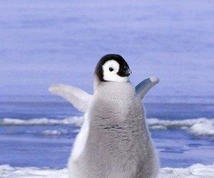 penguin, ariana grande, and meme image