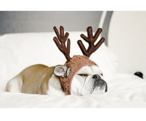 dog, cute, and reindeer image