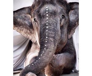 elephant, animal, and black and white image