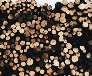wood, winter, and nature image