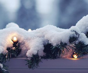 christmas lights, tree, and cozy image