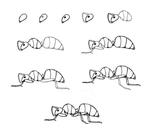 insects and how to draw image