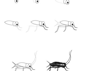 insect and how to draw image