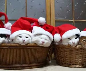 cats, red, and christmas image