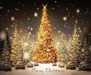 christmas, tree, and xmas image