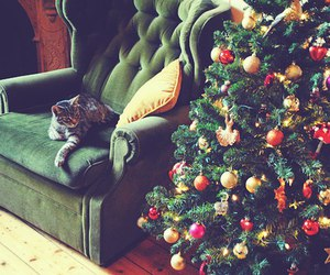 cat, christmas, and winter image