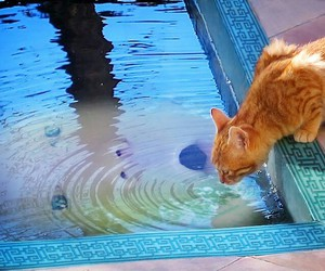 cat and pool image