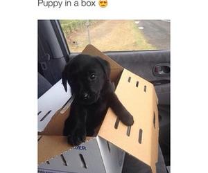 box, dog, and puppy image