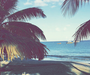 beach, palm tree, and summer image