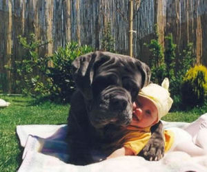 animals, baby, and friendship image
