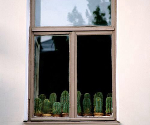 cactus, window, and green image