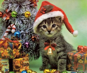 cat, christmas, and gifts image