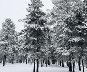 snow, winter, and trees image