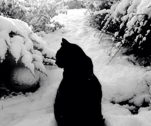 snow, cat, and black image