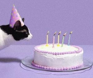 cat, cake, and birthday image